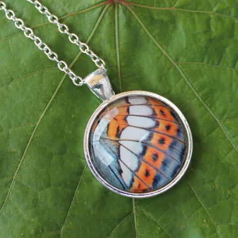 Poplar Admiral Butterfly Pendant Necklace v2, Butterfly Wing Necklace, Blue Butterfly Necklace, Picture Pendant with Butterfly, Entomology