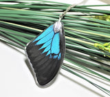 Real Ulysses Wing v2, Real Wing Necklace, Blue Black Butterfly, Papilio Ulysses Necklace, Entomology, Butterfly Wing Encased in Resin, Wing
