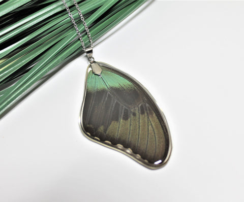 Papilio Peranthus Wing v2, Real Wing Necklace, Green Black Butterfly Necklace, Peranthus Necklace, Entomology, Butterfly Encased in Resin