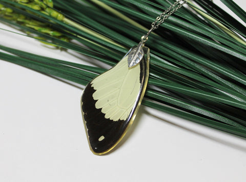 African swallowtail, Mocker Swallowtail,  Flying Handkerchief Wing, Real Wing Necklace, Papilio Dardanus, Preserved Butterfly Wing, Zoology