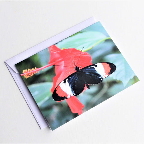 Heliconius Butterfly Greeting Card, Butterfly Card, Butterfly Blank Card, Entomology Card, Insect lover Card, Insect, Lepidoptera Card
