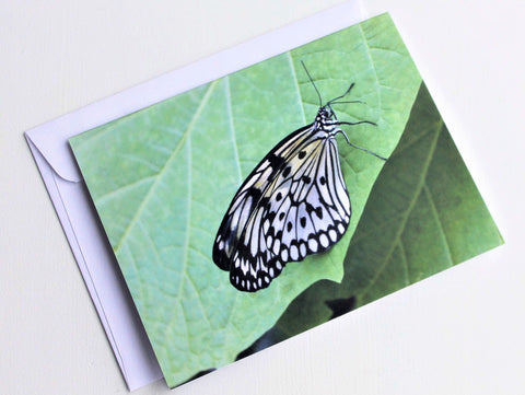 Rice Paper Butterfly Greeting Card, Butterfly Card, Butterfly Blank Card, Entomology Card, Insect lover Card, Insect Card, Lepidoptera Card