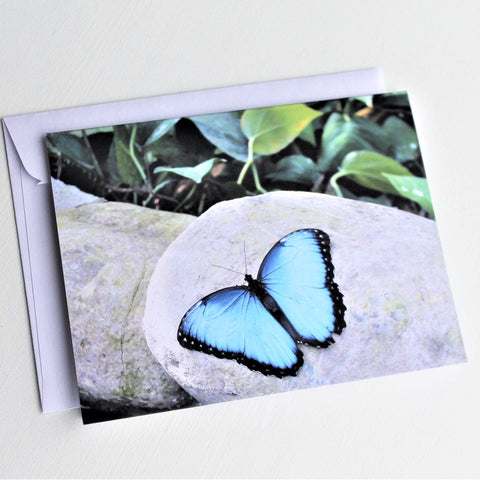 Blue Morpho Butterfly Greeting Card, Butterfly Card, Butterfly Blank Card, Entomology Card, Insect lover Card, Insect Card, Lepidoptera Card