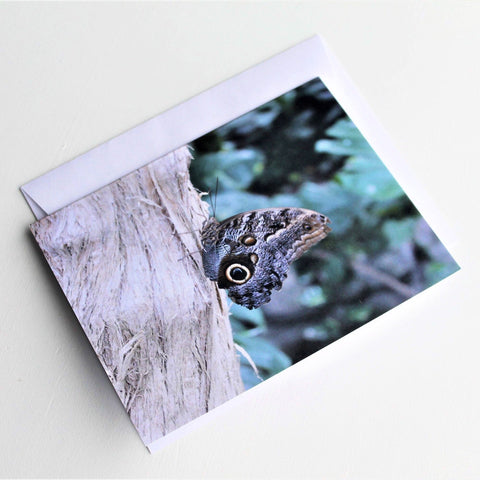 Owl Butterfly Greeting Card, Butterfly Card, Butterfly Blank Card, Entomology Card, Insect lover Card, Insect Card, Lepidoptera Card