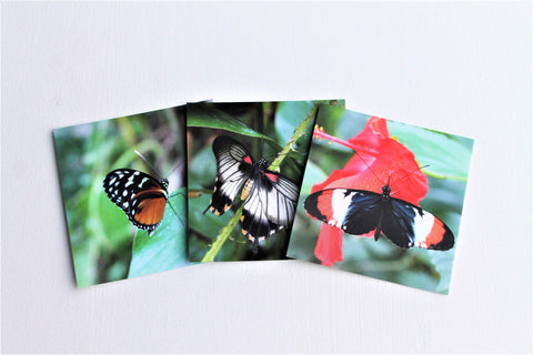 Butterfly Gift Tags Set of Three, Butterfly Paper Tags, Butterfly card, Entomology Card, Insect lover Card, Insect Card, Lepidoptera Card