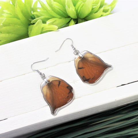 Anaea Butterfly Wing Earrings, Brown Orange Leafwing Butterfly Wings, Wing Earring, Butterfly Wing Preserved, Wing Encased in Resin, Insect