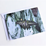 Tailed Jay Butterfly Greeting Card, Butterfly Card, Butterfly Blank Card, Entomology Card, Insect lover Card, Insect, Lepidoptera Card