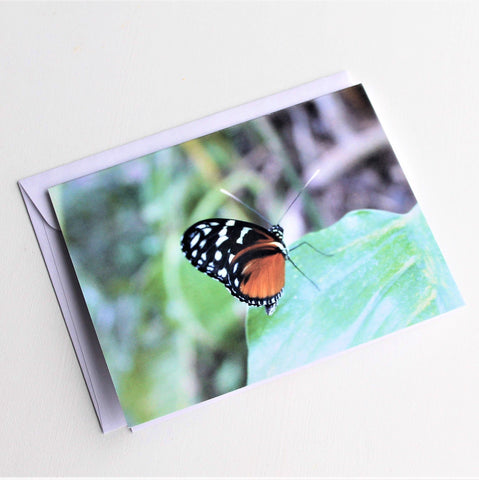 Tiger Longwing Butterfly Greeting Card, Butterfly Card, Butterfly Blank Card, Entomology Card, Insect lover Card, Insect, Lepidoptera Card