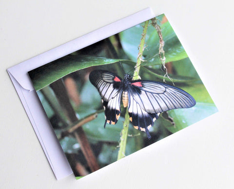 Common Mormon Butterfly Greeting Card, Butterfly Card, Butterfly Blank Card, Entomology Card, Insect lover Card, Insect, Lepidoptera Card