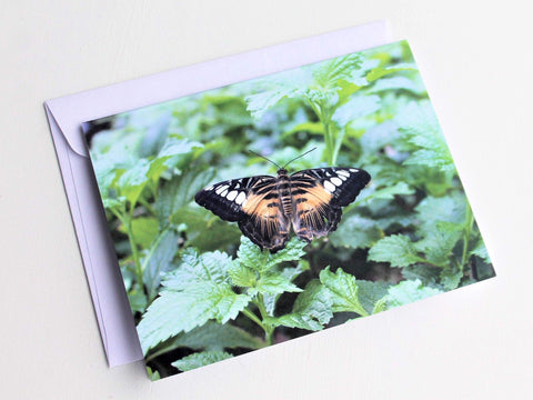 The Clipper Butterfly Greeting Card, Butterfly Card, Butterfly Blank Card, Entomology Card, Insect lover Card, Insect Card, Lepidoptera Card