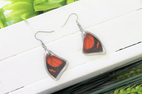 Anaea Butterfly Wing Earrings, Orange Leafwing Butterfly Wings, Wing Earring, Butterfly Wing Preserved, Wing Encased in Resin, Entemology