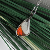Little Orange Tip Butterfly Wing, Butterfly Wing Pendant Necklace, Colotis etrida, Preserved Butterfly Wing, wing Encased in Resin, Zoology