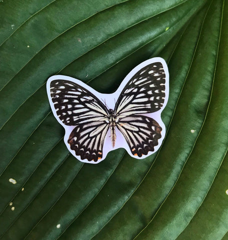 Black and White Butterfly Sticker, Planner Sticker, Laptop Sticker, Stickers, Craft Stickers, Nature Stickers, Sticker Collector