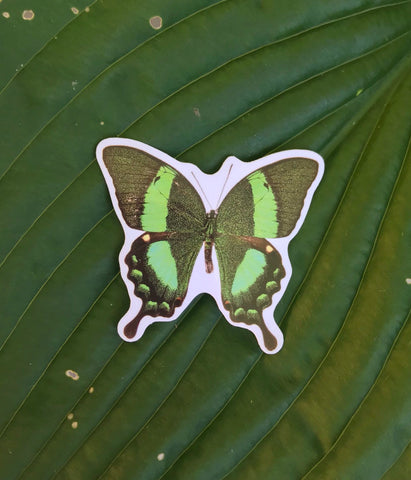 Green Butterfly Sticker, Planner Sticker, Laptop Sticker, Stickers, Craft Stickers, Nature Stickers, Sticker Collector, Swallowtail