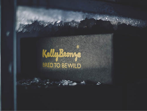 Bred to be Cool KellyBronze