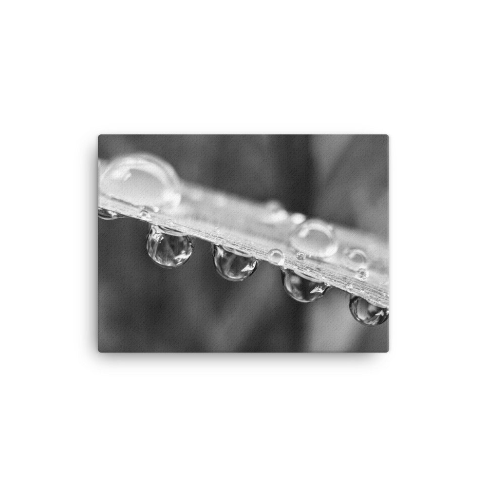 Drops of Grass