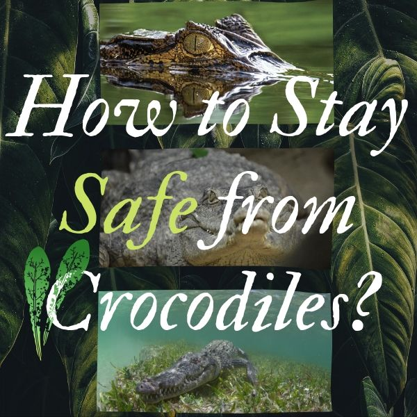 How to Stay Safe from Crocodiles & Alligators in the Wilderness