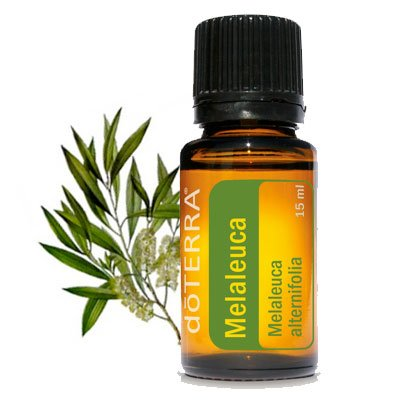 Tea Tree - Pure Essential Oil