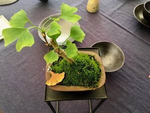 Wedged Clay Ginkgo leaf Personal Cup