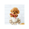 Toy Poodle in Cup Kit