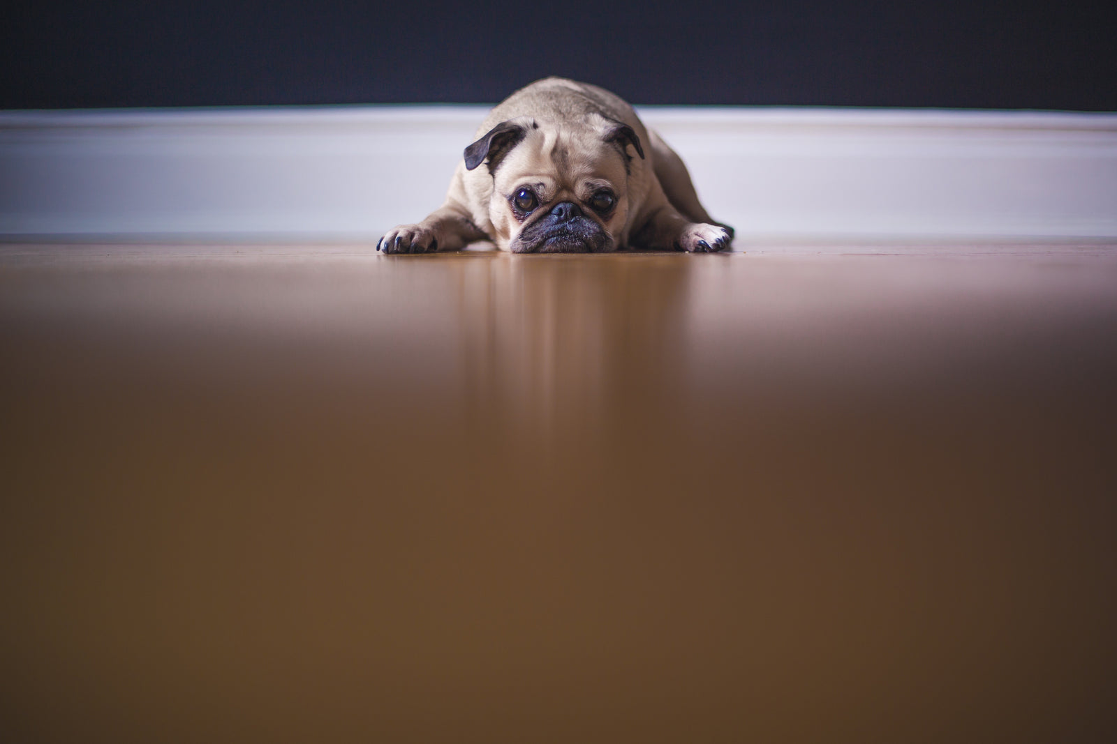 why is my dog scared of the vacuum? tips to help it overcome