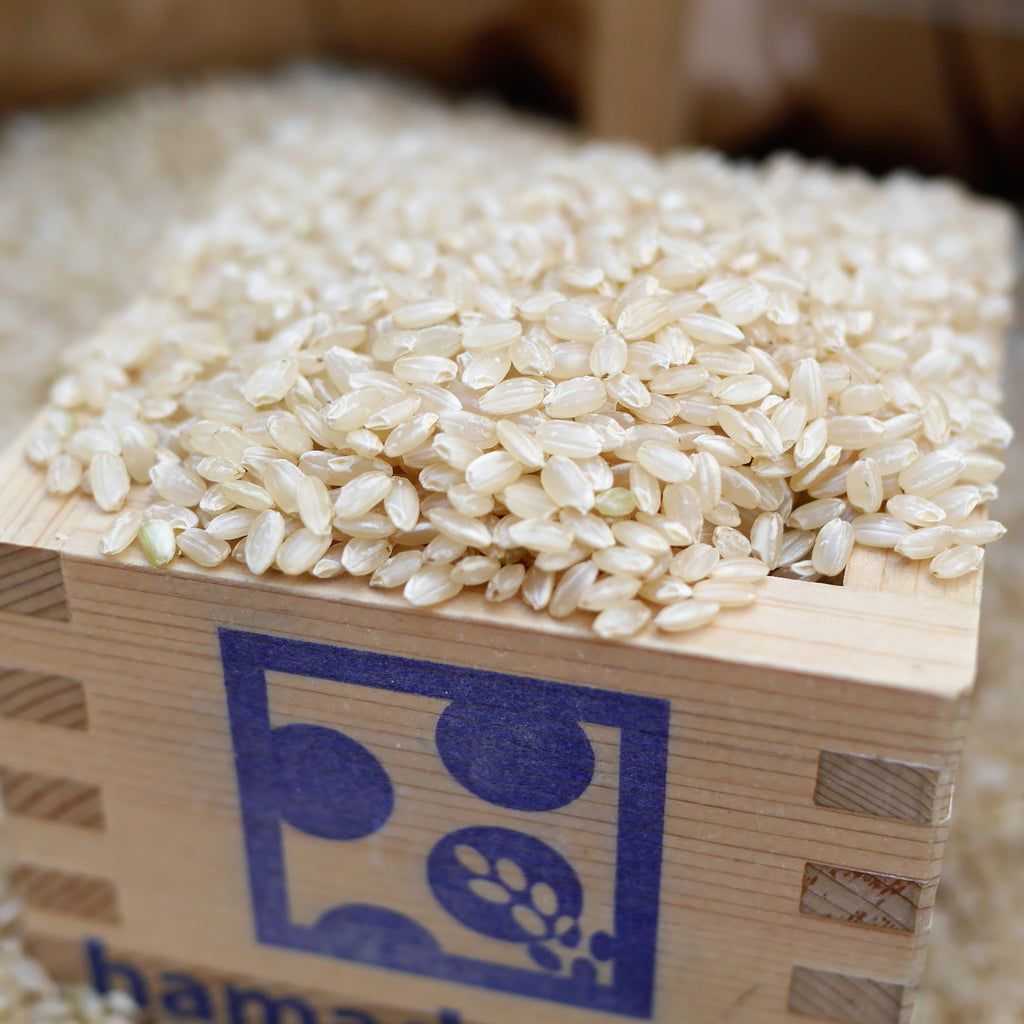 Kurobe Koshihikari Brown rice (1.5kg/5kg Direct shipment from Kurobe)