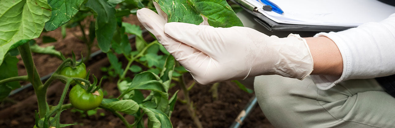The Best Disposable Gloves for Farming and Agriculture