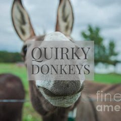 Quirky Donkey Fine Art Printed Throw Pillows by Jani Bryson Storyteller