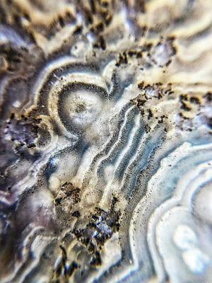 Crystals And Stones Crazy Lace Agate 1023 - Art Print - Jani Bryson Intuitive Photographer