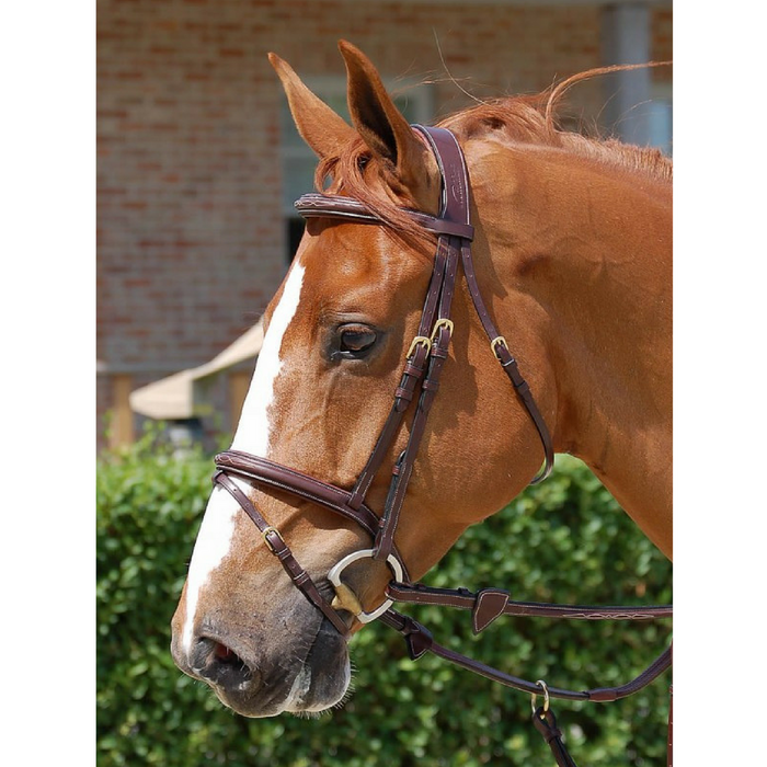 Dyon Flash Noseband Bridle Dyon Collection
