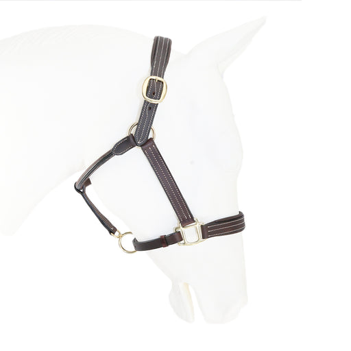 Padded Leather Halter 1""