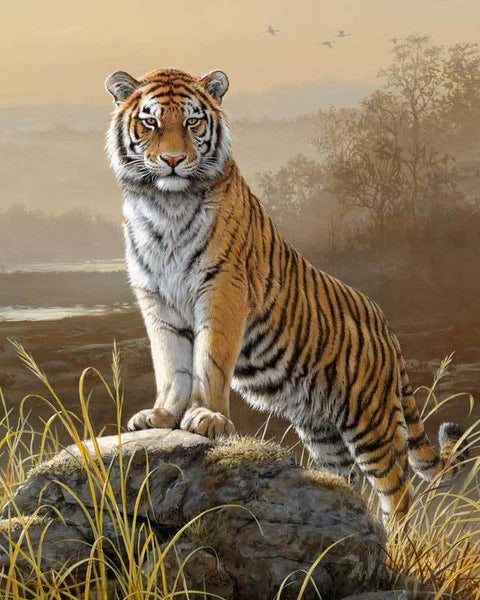 Majestic Tiger
