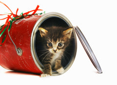 Kitten in a red can