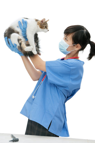 veterinarian holding a cat in the air