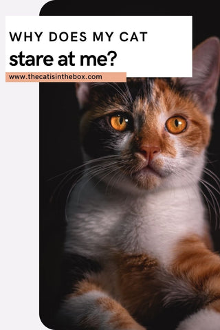 why does my cat stare at me - Pinterest-friendly pin