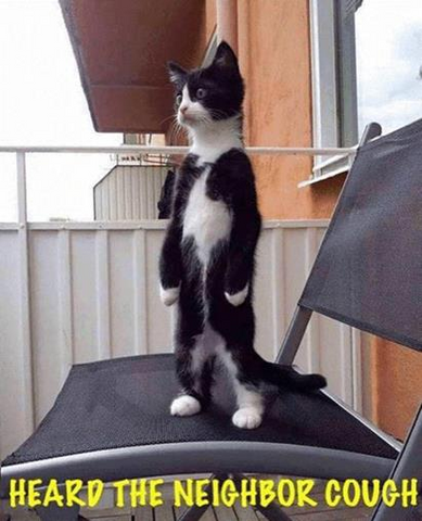 Cat standing on two legs: heard the neighbor cough!