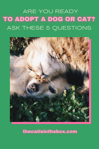 Are you ready to adopt a dog or cat? Ask yourself these 5 questions. Pinterest-friendly pin