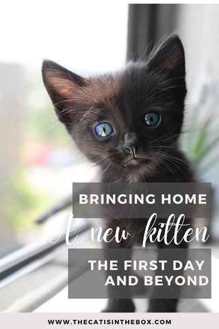 bringing home a new kitten - the first day and beyond