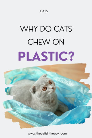 Why do cats chew on plastic - Pinterest-friendly pin