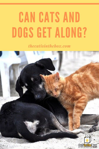 Can cats and dogs get along Pinterest-friendly pin