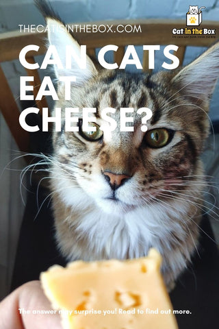 Can cats eat cheese - Pinterest-friendly pin