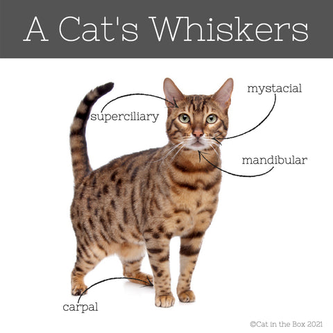 A Cat's Whiskers