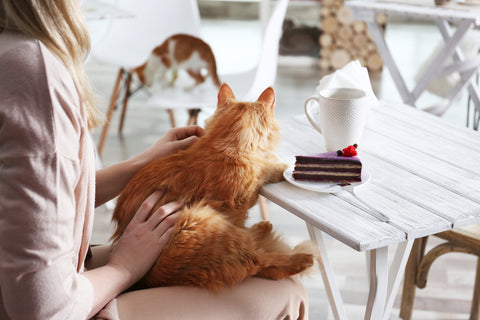 woman in a cat cafe with an orange cat on her lap