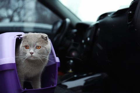 cat in a carrier in the car