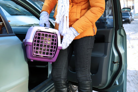 putting a cat carrier in the car