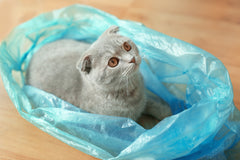 cat on a plastic bag