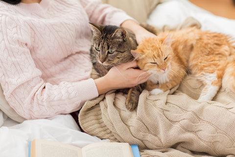 two cats in bed with a person