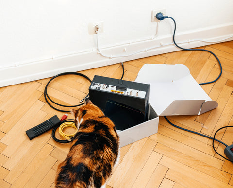 cat chewing electrical cords