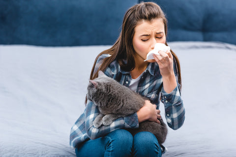 girl with allergy to British shorthair cat