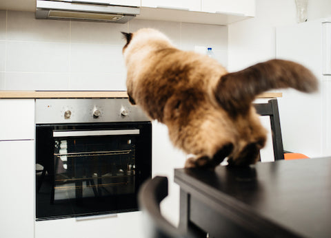 cat jumping from one kitchen counter to another